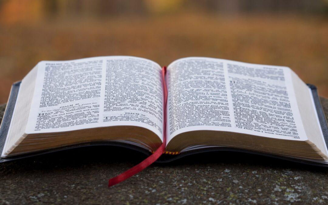 Week Four Bible Reading