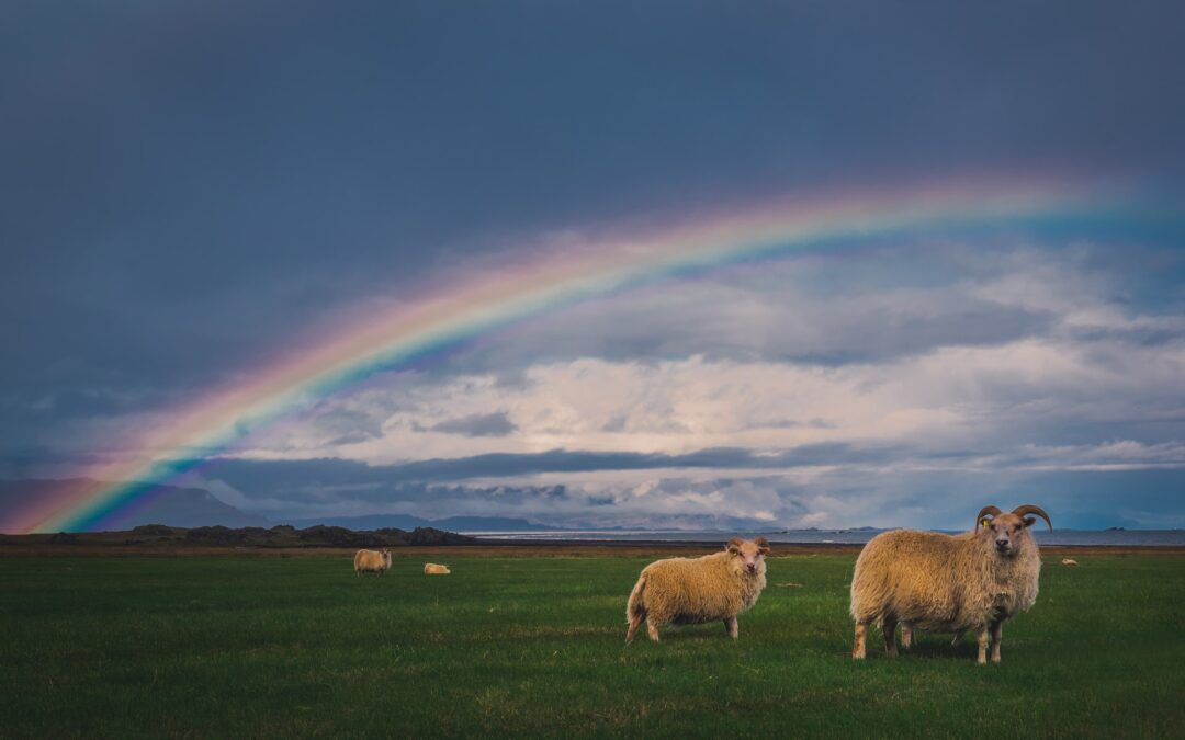 The Covenant Through Noah